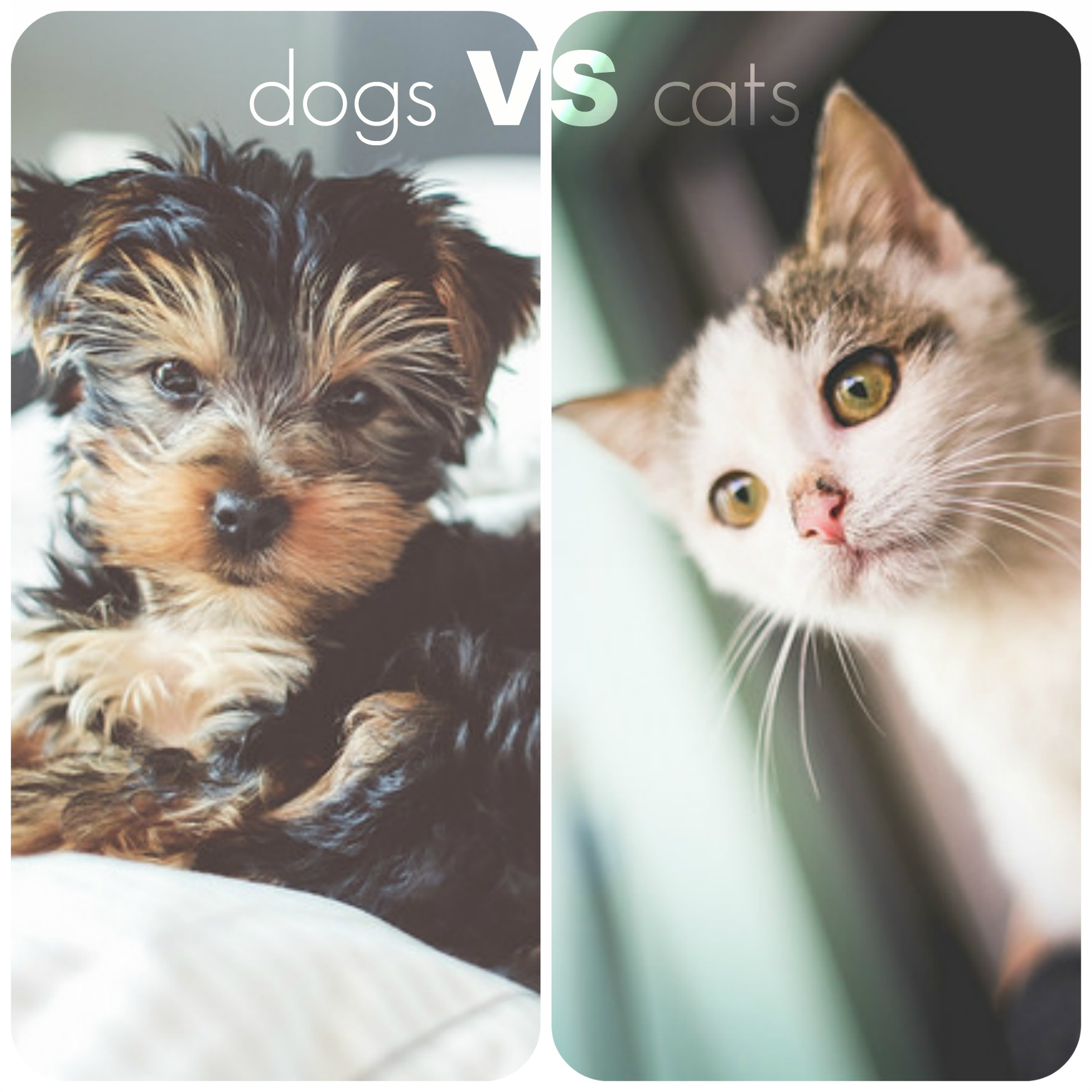 Best Apartment Pets: Cats Vs. Dogs: What's The Best Apartment Pet?